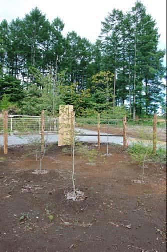 植樹した木々