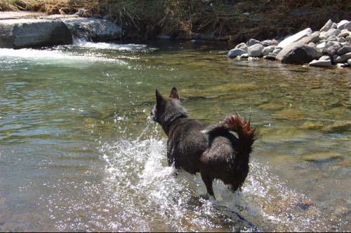 水遊びをして大喜びのマル