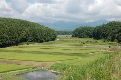 八ヶ岳と田んぼ
