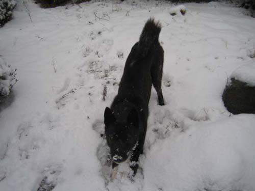 雪に大喜びのマル